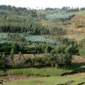 HOPEthiopia's South Site Nurseries