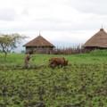 Farming in Harbu Chulule