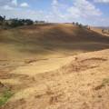 New reforestation land