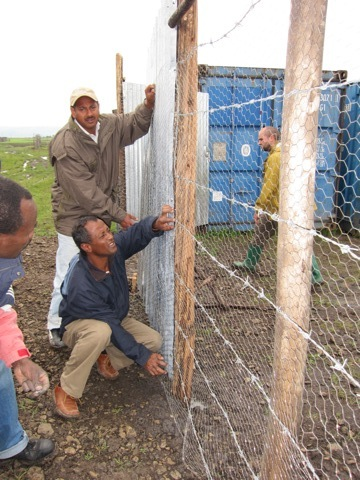 Fence work is needed to protect the new seedlings from the roaming goats and cattle in the area.