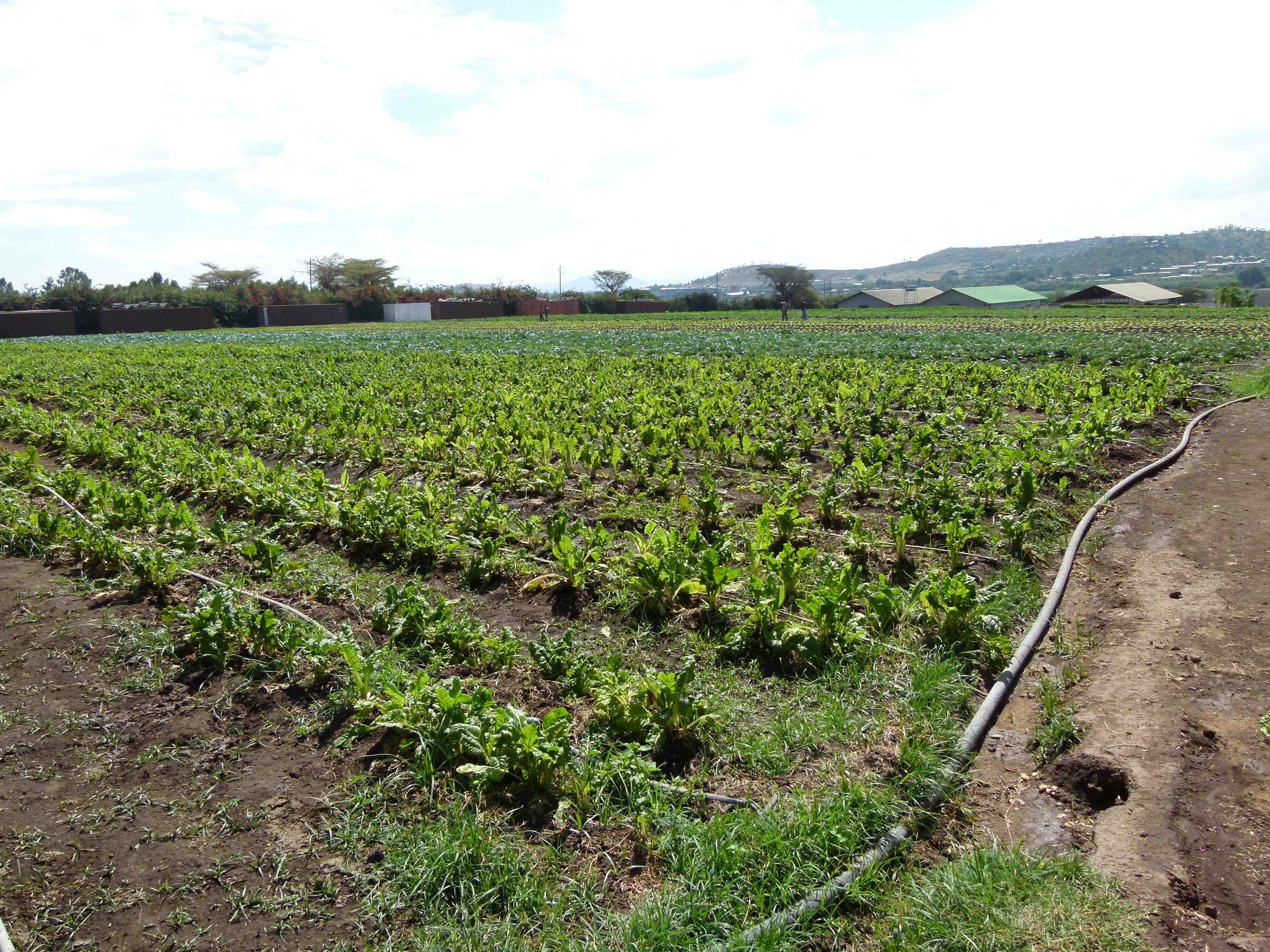 Touring Agricultural Projects In Ethiopia