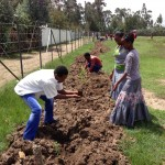 Students from the Grade 12 class have the opportunity to plant seedlings from the Hopethiopia reforestation nursery to help beautify their new Preparatory school facility.